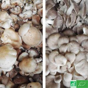 Champignons du jour bio - La ferme lombricole des Savoie