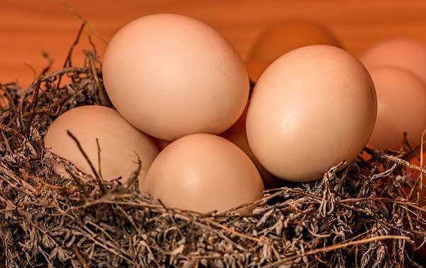 Œufs - Le bonheur est dans le nid