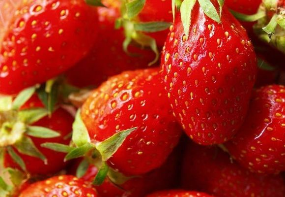 la fraiseraie