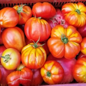 tomate ancienne