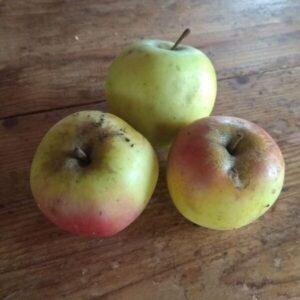 pomme variété ancienne croison